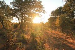 非洲大草原 库存照片