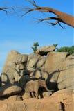 非洲大象公园徒步旅行队 免版税库存图片