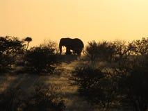非洲大象日落 免版税图库摄影