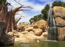 非洲大象, Bioparc在巴伦西亚 免版税库存照片