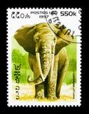 非洲大象(非洲象属africana), serie,大约1997年 库存图片