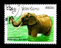非洲大象(非洲象属africana), serie,大约1997年 库存照片