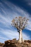 非洲年龄颤抖南结构树 免版税库存照片