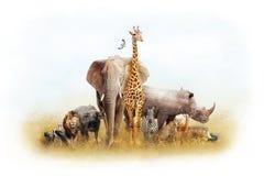 非洲徒步旅行队动物幻想土地 免版税图库摄影