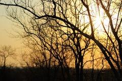 非洲日落在克留格尔国家公园,南非 库存图片