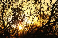 非洲日落在克留格尔国家公园,南非 库存照片