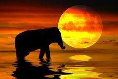 非洲晚上 免版税库存图片