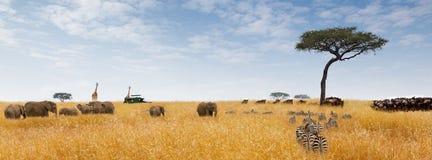 非洲梦想场面网横幅 免版税库存图片