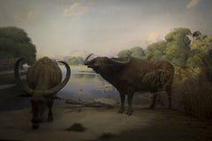 非洲森林和动物 免版税库存照片
