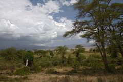 非洲横向ngorongoro 库存照片