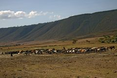 非洲横向ngorongoro 免版税库存照片