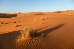 非洲沙漠横向 库存图片
