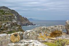 非洲海角dassy好希望非洲蹄兔岩石 免版税库存照片