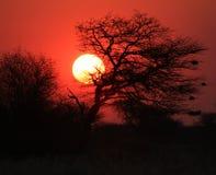 非洲灌木日落-熔化的金子 免版税库存照片