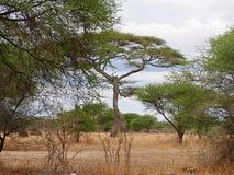 非洲的美好的风景 免版税库存照片