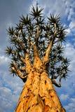 非洲纳米比亚颤抖南部的结构树 库存图片