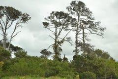 非洲结构树 免版税图库摄影