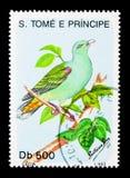 非洲绿色鸽子(Treron calvus),鸟serie,大约1993年 库存图片