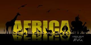 非洲野生生物背景传染媒介  库存照片