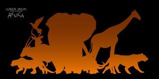 非洲野生生物背景传染媒介  免版税库存图片