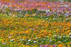 非洲野花 库存照片