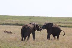 非洲闪光McTours和旅行 免版税库存照片