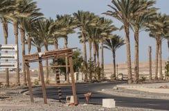 非洲风景在一个晴天 去在棕榈和灌木中的柏油路与花 库存照片