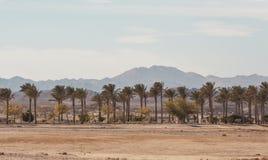 非洲风景在一个晴天 去在棕榈和灌木中的柏油路与花 免版税库存图片