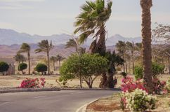 非洲风景在一个晴天 去在棕榈和灌木中的柏油路与花 免版税库存照片