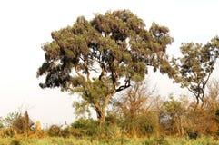非洲bushland 库存照片
