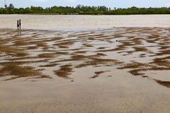 非洲fadiouth海岛joal塞内加尔壳 免版税库存图片