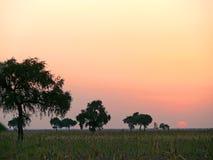 非洲。西南苏丹。日落。风景自然。 免版税图库摄影