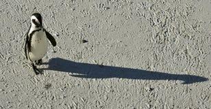 非洲企鹅和阴影 图库摄影