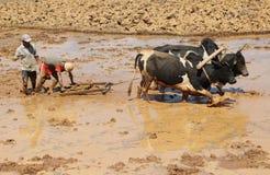 非洲农夫在工作在马达加斯加 免版税图库摄影