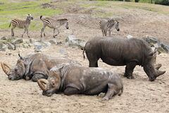 非洲动物区系 免版税库存图片