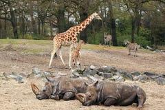 非洲动物区系 免版税库存照片