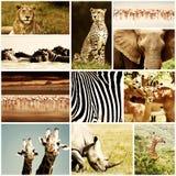 非洲动物徒步旅行队拼贴画 库存图片