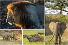 非洲动物拼贴画 库存图片