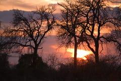 非洲南日落 免版税库存图片