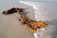 非洲南海滩的海带 免版税库存图片