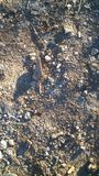非洲土壤 免版税库存照片