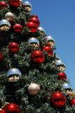 非洲圣诞树在晴朗的天空下 库存图片