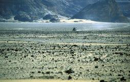 非洲埃及撒哈拉大沙漠FARAFRA白色沙漠 免版税库存图片