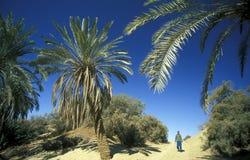 非洲埃及撒哈拉大沙漠SIWA绿洲 免版税库存照片