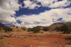 非洲大草原 免版税图库摄影