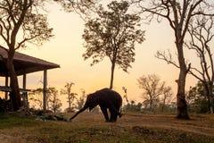 非洲大象剪影 免版税图库摄影