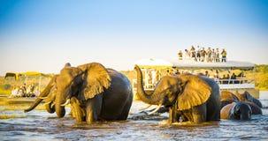 非洲大象徒步旅行队 免版税库存图片