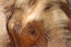 非洲大象眼睛特写镜头 免版税图库摄影
