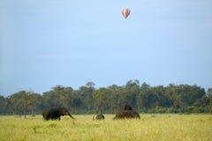 非洲大象走与气球在头顶上在马塞语玛拉草原在肯尼亚,非洲 免版税图库摄影