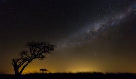 非洲天堂 库存照片